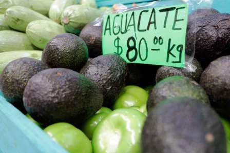 aguacate 2606